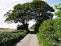 Moor Lane - geograph.org.uk - 515043.jpg