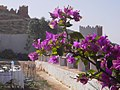 Morocco CMS CC-BY (15126531054).jpg