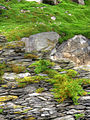 Moss and pebbles (8045591521).jpg