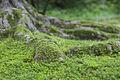 Moss kenrokuen.jpg
