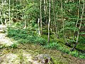 Mossy gill, St. Leonards Forest (geograph 3582662).jpg
