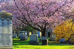 Mount Pleasant Cemetery in cherry blossom.jpg