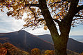 Mountain and Tree (22383742456).jpg