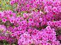 Muckross House, 9.5.14 - panoramio (2).jpg