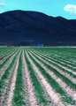 NRCSUT03012 - Utah (6395)(NRCS Photo Gallery).tif