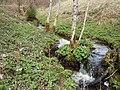 NSG Glaswiesen und Glaswald 03.jpg