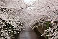 Nakameguro 2009-04-05 (3448459651).jpg