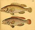 Naturgeschichte in Bildern mit erläuterndem Text (Taf. LVIII) (6059213772).jpg