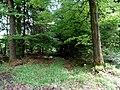 Naturpark Arnsberger Wald fd (21).jpg