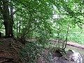 Naturschutzgebiet Diekbek Hamburg-Duvenstedt (6b).jpg