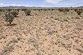 Near Chupadera Mesa - Flickr - aspidoscelis.jpg