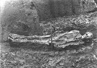 Homem de Nederfrederiksmose 1898 (colheita) .jpg