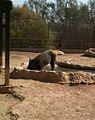 Negev Zoo Beersheva Israel IMG 0647a.JPG