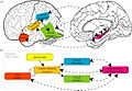 Neural and functional organization of systems involved in representing and learning spoken words.jpg