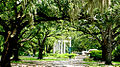 New Orleans Audubon Zoo Trees moss 2002.jpg