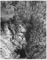 Newberry County, South Carolina. Gully on Enoree District of Sumter National Forest slowly healing . . . - NARA - 522766.tif