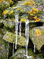 Newburgh, Lichens and icicles on Knockhall Castle - geograph.org.uk - 1156342.jpg