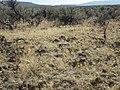 North of Jordan Valley OR ID sagebrush steppe (9674149415).jpg