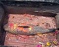 Nyalon stone fish.jpg