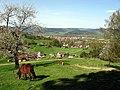 Oberhalb des Jungbauerhofes Blick nach Kirchzarten im Dreisamtal.jpg