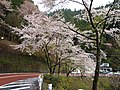 Okutama , Tokyo - panoramio (6).jpg