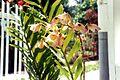 Orchidée (3238286728).jpg