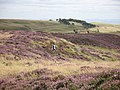 Orienteering on the Lomond Hills - geograph.org.uk - 536258.jpg