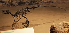 Ornitholestes mount at Royal Tyrrell Museum.jpg