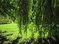 Oslo Botanical Garden - IMG 8996.jpg