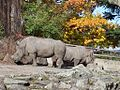 Ostrava, zoo, výběh nosorožců.jpg