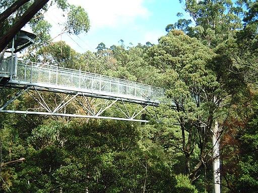 Otway Fly Tree Top Walk (927177981)