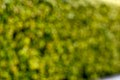 Out of Focus Green Backgounds-3-2.jpg