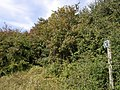 Overgrown path - geograph.org.uk - 569275.jpg