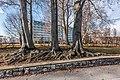 Pörtschach Hans-Pruscha Weg Buchen vor dem Parkhotel 16012018 2255.jpg