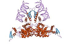 PDB 1yyw EBI.jpg