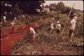 PRISONERS FROM JEFFERSON COUNTY JAIL CLEAR BRANCHES FROM POLLUTED STREAM - NARA - 545535.tif