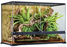 PT2614 Natural Terrarium Filled.jpg