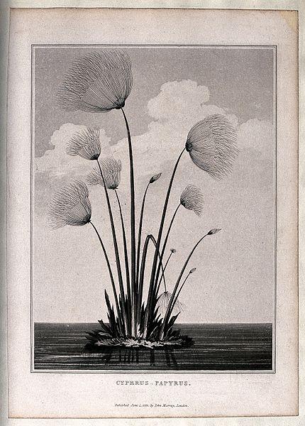 papyrus - image 6