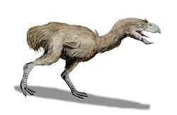 Paraphysornis, un oiseau de terreur qui a vécu au Brésil, il y a 23 millions d'années, reconstitué par un artiste (les couleurs sont imaginées)