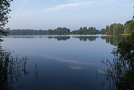 Park Lingezegen, de oosterlijke Rijkerswoerdse Plas IMG 9575 2021-07-03 07.20.jpg