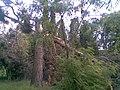 Park s fontánou pred ŽSR v PB, dnes už neexistujúci , nafotené po búrke , ktorá sa prehnala mestom 22.5.2009 (4 z 6) - panoramio.jpg