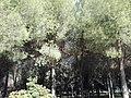Parque Infanta Elena (Sevilla) 30.jpg