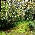 Parque Terra Nostra, Furnas, S. Miguel, Açores,Portugal - panoramio (26).jpg
