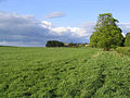 Pasture field - geograph.org.uk - 427609.jpg