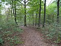 Path in the Hambach forest 01.jpg