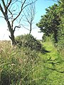 Path to the River Yare - geograph.org.uk - 1368186.jpg