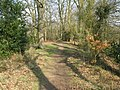 Path towards the River Wey - geograph.org.uk - 1220082.jpg