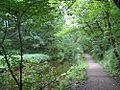 Path up through Skipton Wood.jpg
