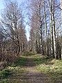 Pathway by Loch of Aboyne - geograph.org.uk - 364226.jpg