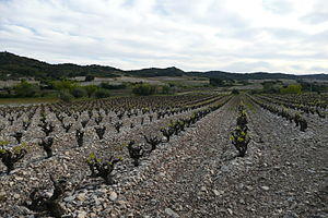 Tavel AOC - Tavel vineyard with bushvines